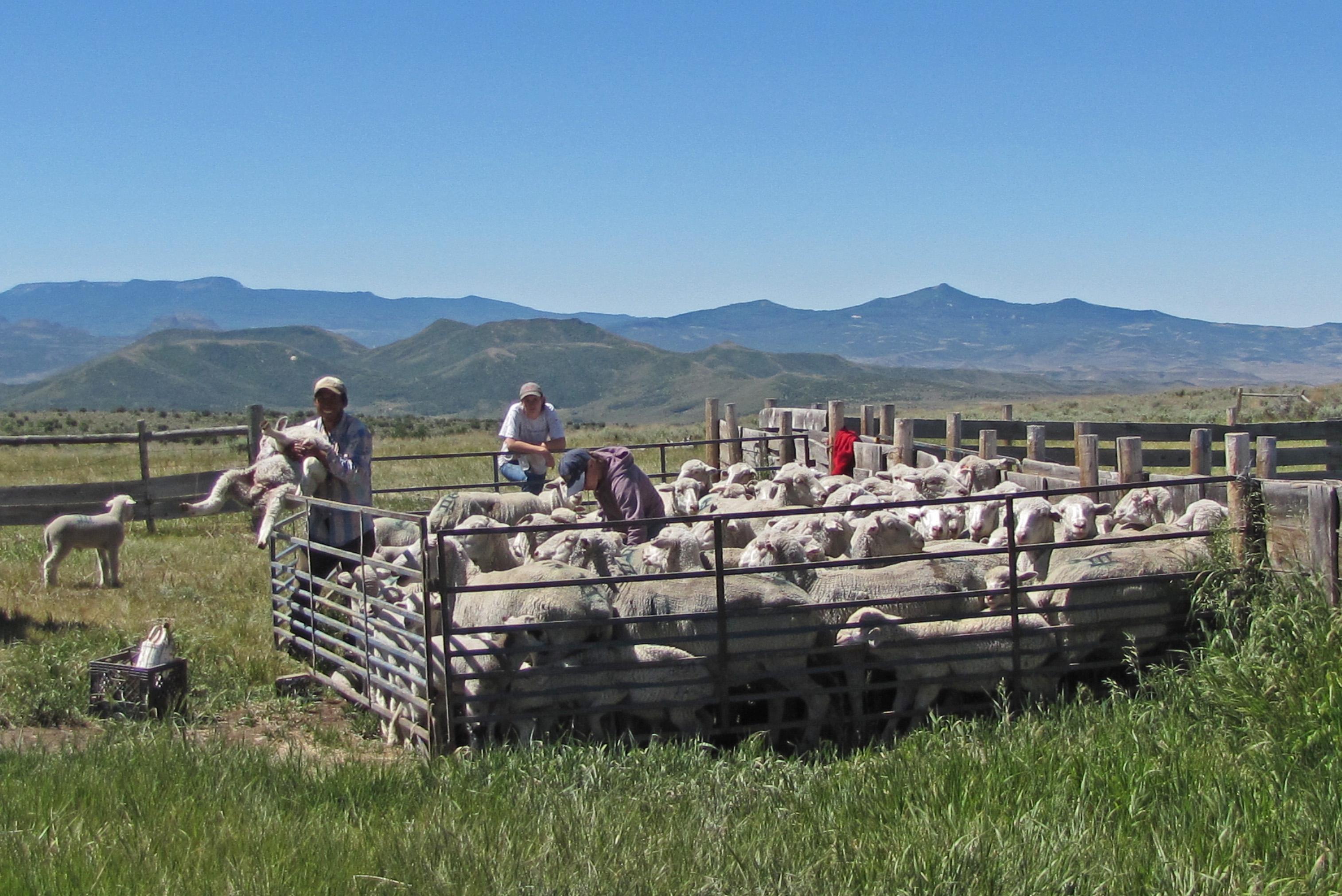 Stumbling Upon a Sheep Corral | LivOnAMission