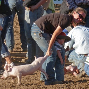 capturing a pig at Snake River Fun Days