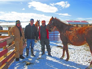 winter crew with young horse