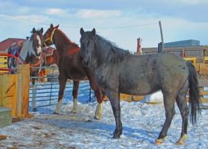 tres caballow