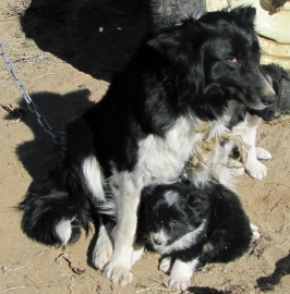 Modesto's dog with pups