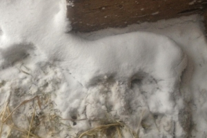 Snow-covered dead lamd