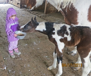 Maeve with Daisy's colt