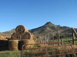 Round bales ready for winter