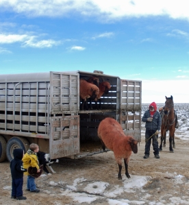 Tiarnan and McCoy supervise unloading the bucks