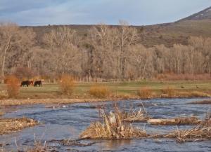 Bulls and Sandhilll cranes by Battle Creek