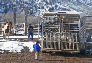 McCoy guarding the milk goa ts