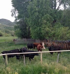 The bull team