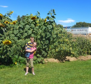 Tiarnan and Siobhan under the sunflowers