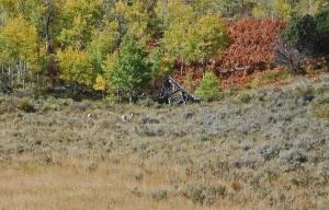 Antelope under Sheep Mountain
