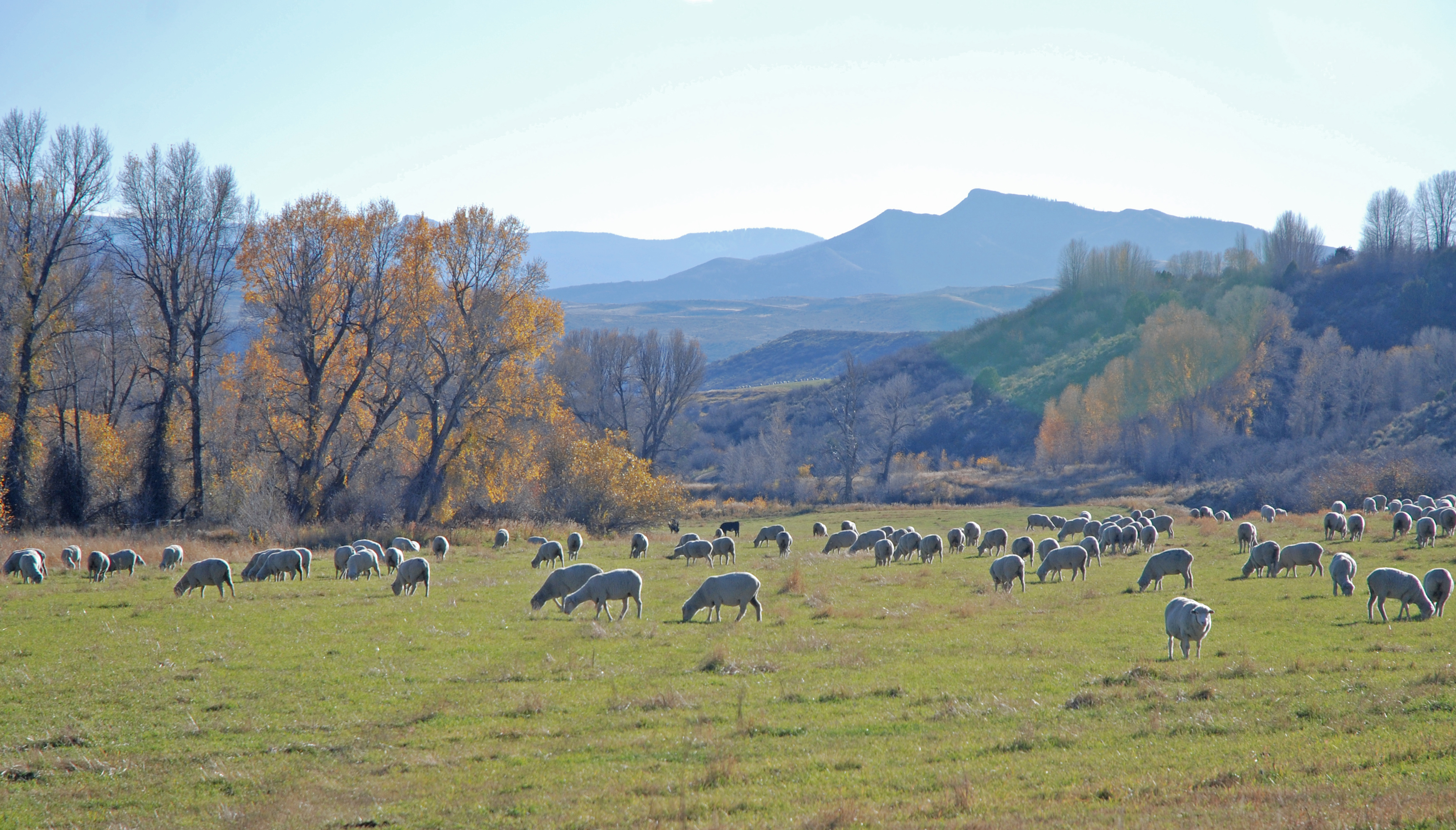 sheep ranch single personals Sheep shepherd needed in oregon scholls ferry farm scholls, or  ranch  hand needed for sheep ranch & quail operation spirit sheep ranch stockton .