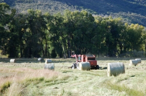 Making the big round bales
