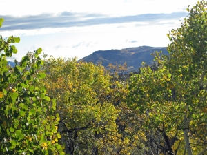 Battle Mountain through the oak brush