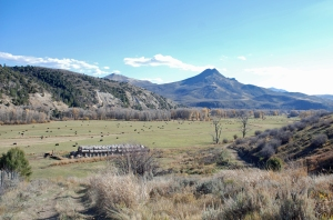 The Upper Meadow with cows and bales--both ready for winter