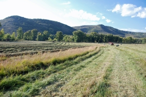 Cutting hay in the Upper Smylie