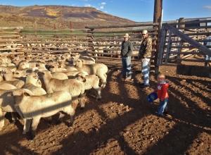 Eamon, Jeff, Rhen, lambs