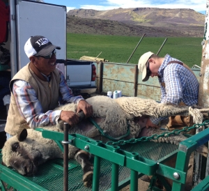 Tim and Jedidiah checking a ram