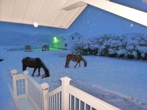 Horses in the yard