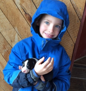 Border collie puppies for sale--we're keeping Seamus!