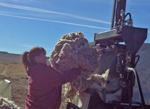 Donna loading fleeces into the brand new packer