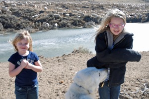Maeve and Siobhan with an adult livestock guardain dog, with the sheep at Lower Powder Springs