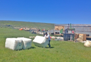 wool packer moving the bales of wool