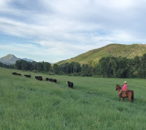 Siobhan trailing the heifers who snuck into the Upper Smylie hayfield