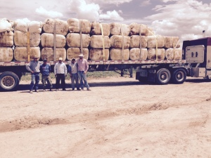 Wool loading crew with  loaded wool