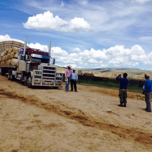 Our Peruvian employees took photos with the wool truck and the truck driver