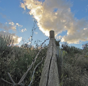 fenceline at sunset Siobhan Lally