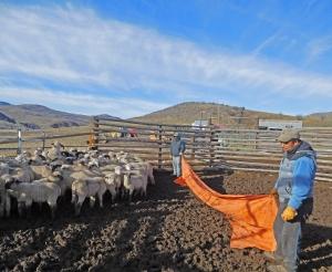 Eduardo and Adolfo bringing up the lambs