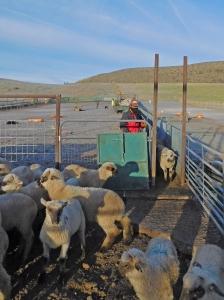 Oscar at the cutting gate