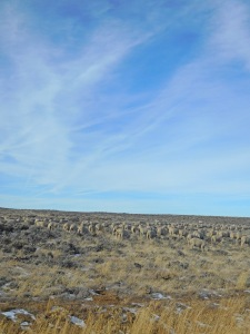Destination: the sagebrush sea