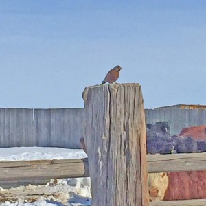 Like a finch on a post...