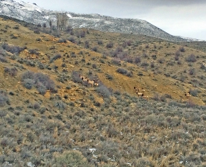 The elk are checking out the high country.