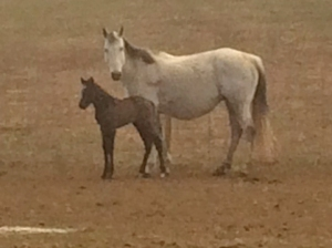 Dirte and her new colt