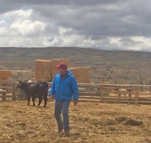 Pat with the heifers and ewes