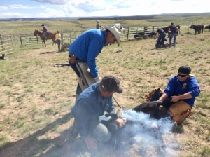 Mike B. and Mike P. branding a calf with help from Kate