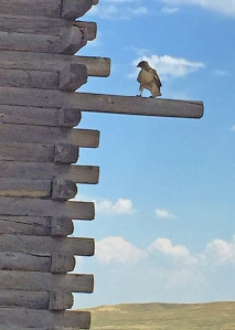 Hawk on a house log