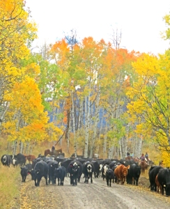 cows-coming-out-of-forest