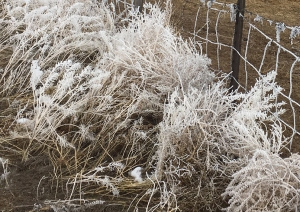 hoarfrost-on-fence