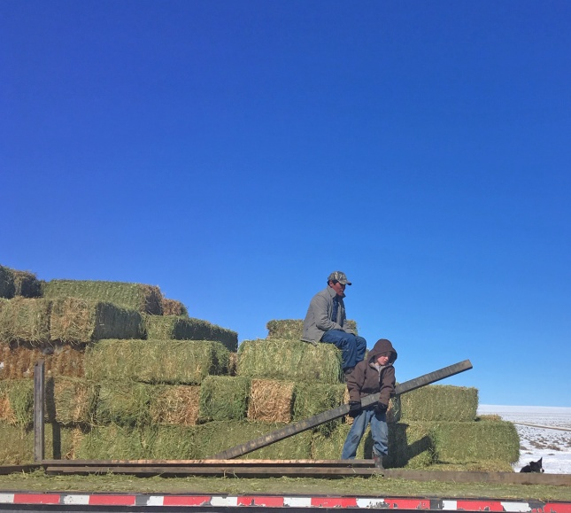 Oscar ands Tiarnan unloading hay
