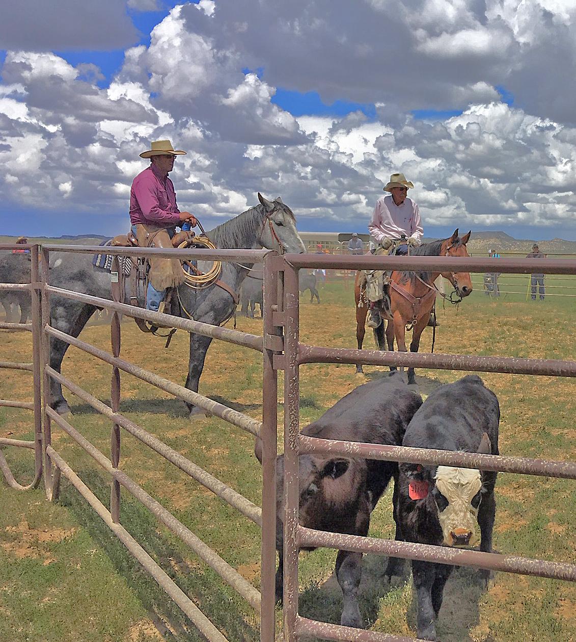 Ranch News — Ladder Ranch